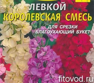 """Левкой """"Королевская смесь"""""""