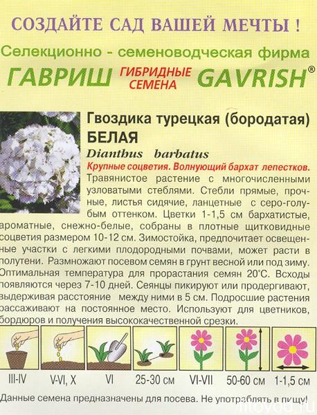 гвоздика белая1