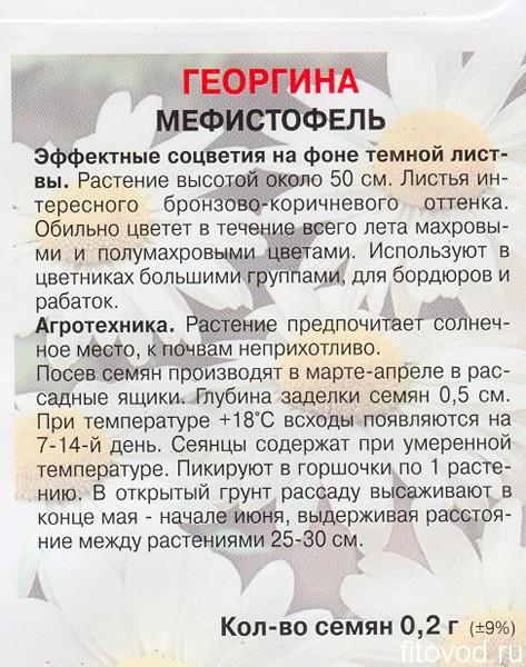 георгина мефист1