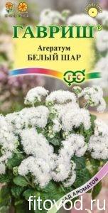 агератум белый