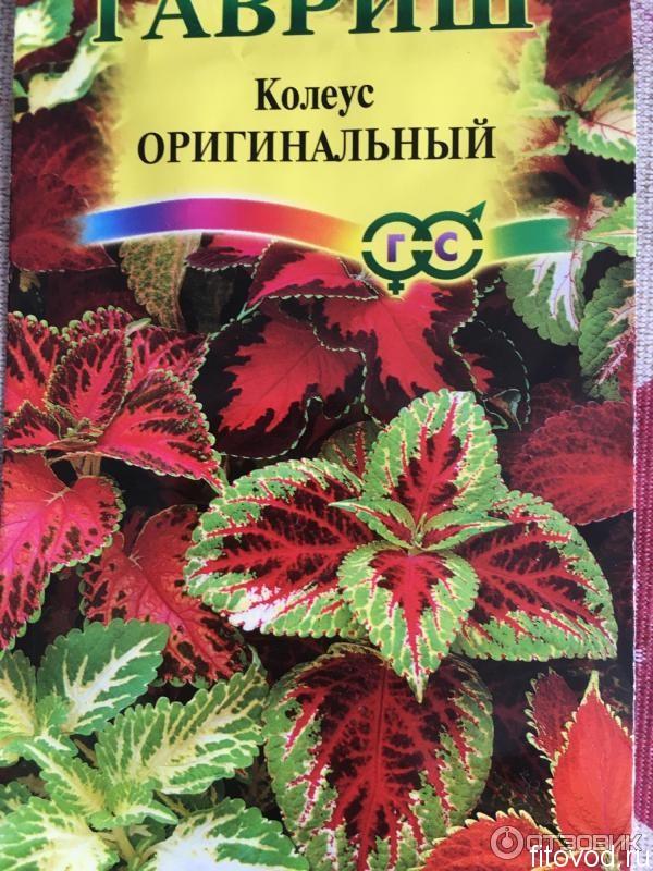 Колеус » Фитовод